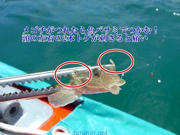 メゴチ釣りの注意