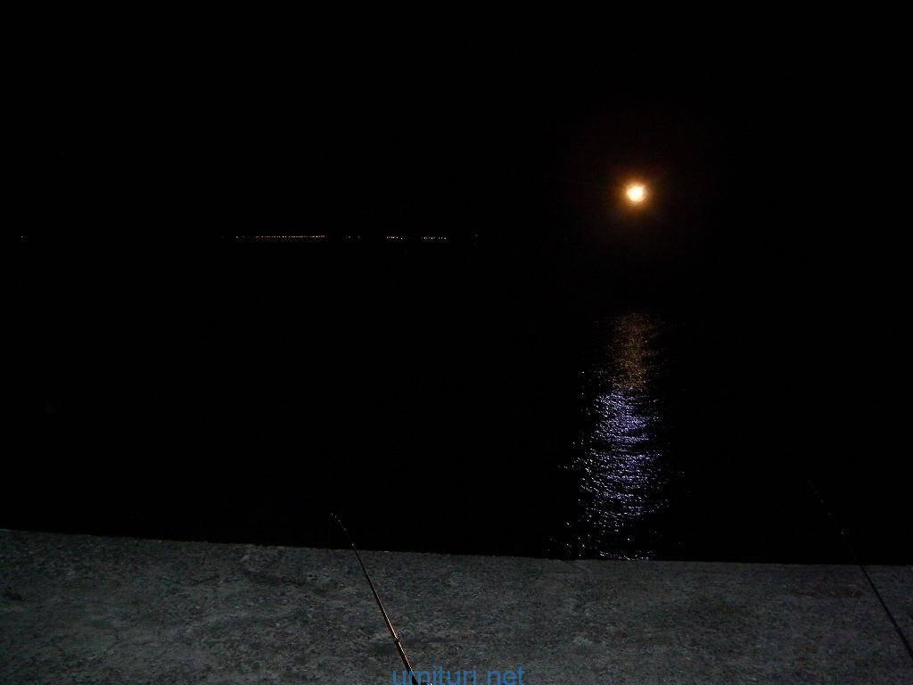 夜釣りで何が釣れる?夜型人間による「夜行性の魚」考察