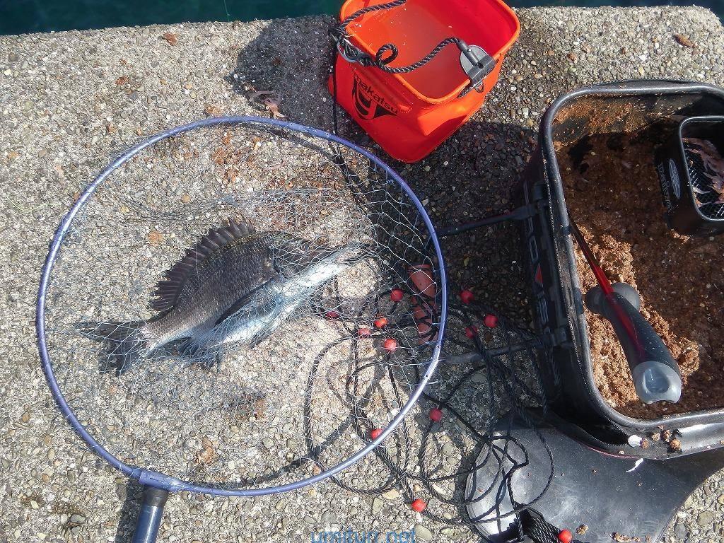 チヌのフカセ釣り