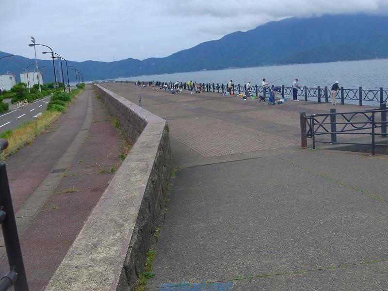 6月の敦賀新港はアジ・サバのサビキ釣りと泳がせ釣りが熱い