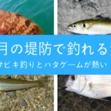 8月の堤防で釣れる魚たち