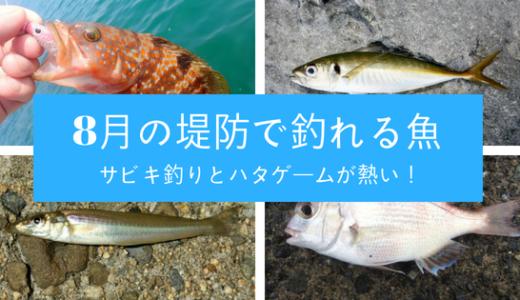 8月の堤防って何が釣れる?手軽に狙う小物釣りで遊ぶ
