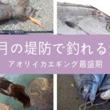 9月の海釣り・堤防釣りで釣れる魚を色々まとめ