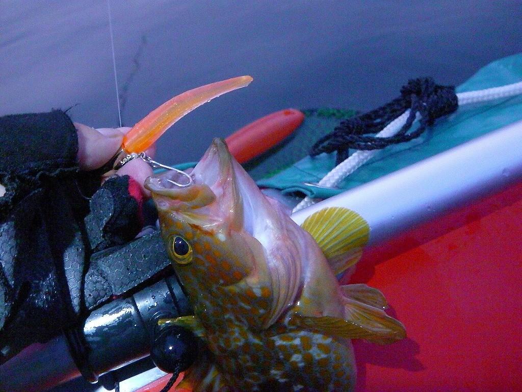 キジハタをマナティー60で爆釣!根魚釣りにおすすめマナティーのレビュー