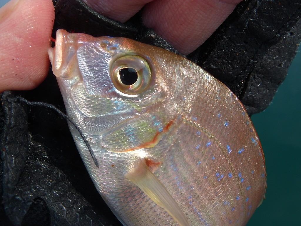 チョイ投げ釣りの釣り方「チョイ」ってどれくらい投げて釣る?