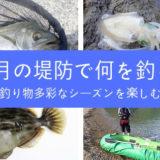 10月どんな魚を釣る?堤防釣りのベストシーズンに釣れる魚