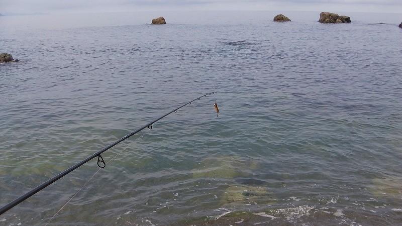 浅場でアオリイカは釣れるのか?海底が見える浅場でのエギング