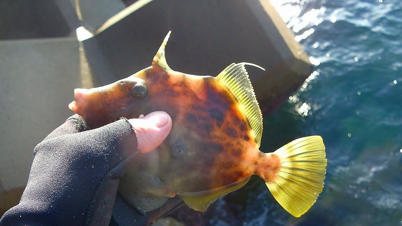 フカセ釣りしながらカワハギを釣る!ついでに大物を逃がした苦い釣行