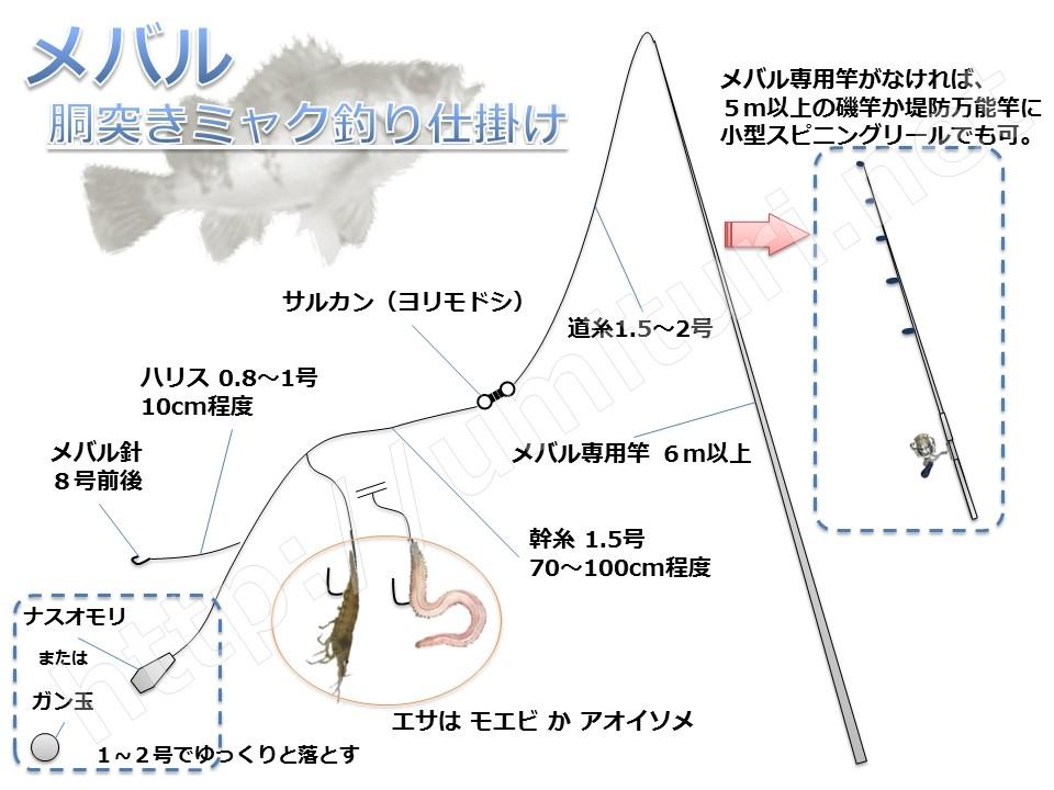メバルのミャク釣り仕掛け図解!シンプルに胴突仕掛けで狙う