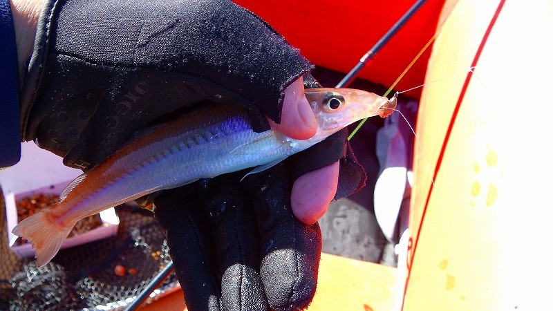 5月・6月のキス釣りは大型揃い!身近な砂浜海岸でボート釣り