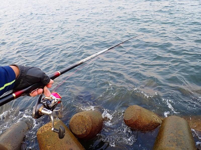 知多半島チヌのフカセ釣りリベンジ!朝マズメの瀬際で誘う