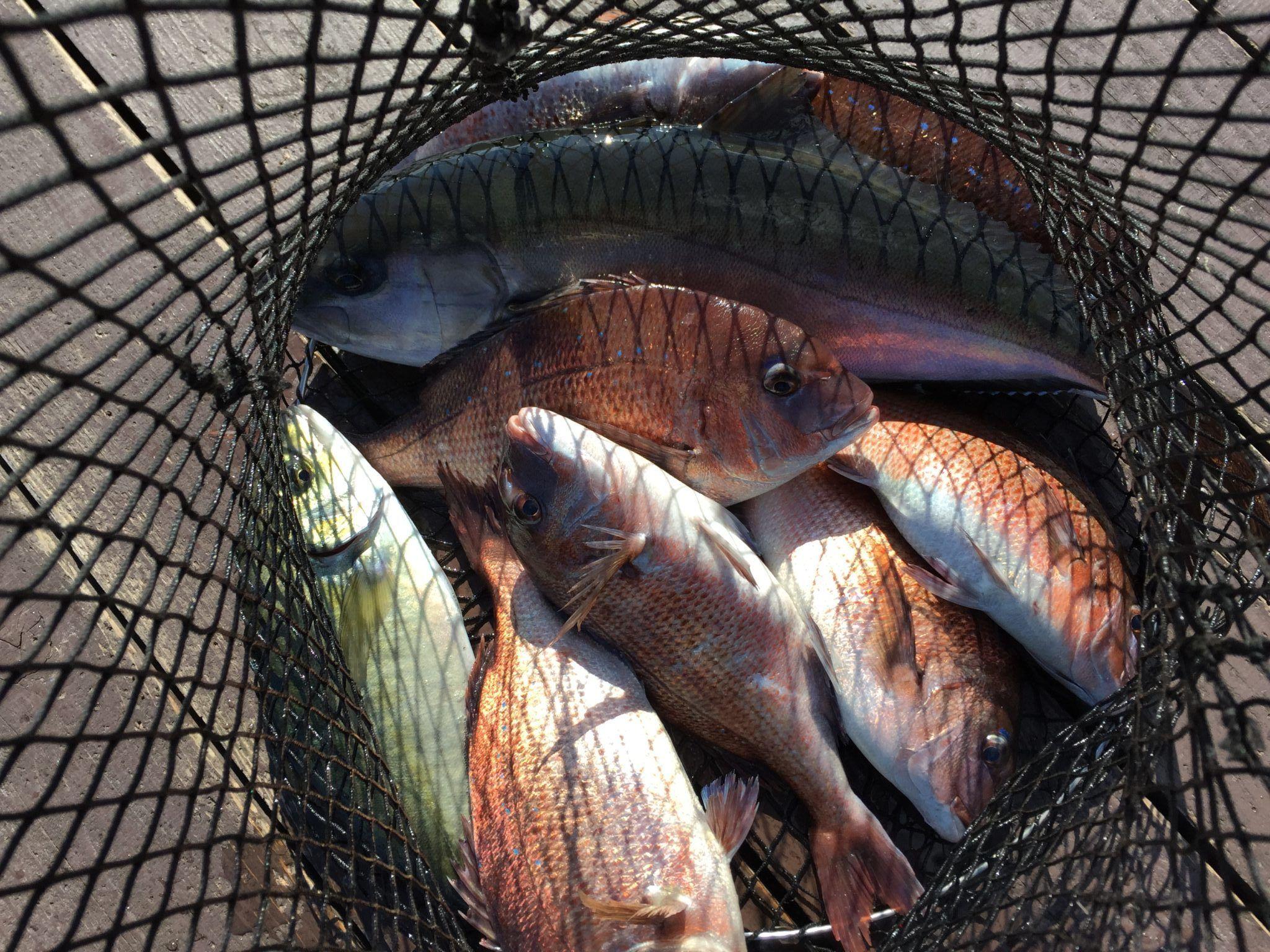 海上釣り堀で定番のエサ選びと、隣の釣り人より食わすためにできる工夫
