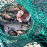 海の釣り堀で元を取るにはどんな魚を何匹釣ればいいか