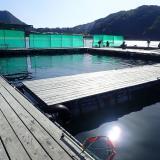 三重の釣り堀「正徳丸」初めての人向けの手順と釣り方