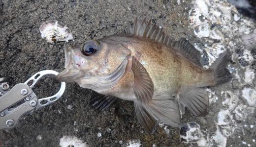 フィッシュグリップ活用のススメ【バス持ち厳禁な魚たち】