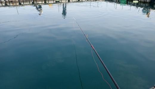 春の海上釣り堀は甘くない...ボーズか爆釣か活性次第で難しい