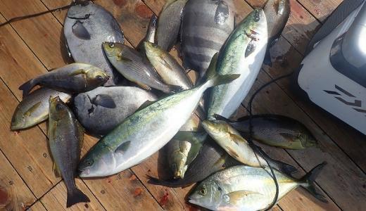 魚を上手に冷蔵庫で保存して美味しさを長持ちさせる熟成方法