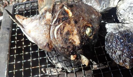 魚の頭・カマはじっくり炭火焼きすると旨さが激増!皮まで美味