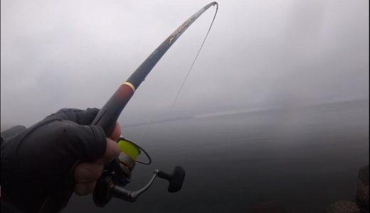 2019年5月初頭のウキフカセ釣りは低水温ながら魚の活性高く色々釣れた