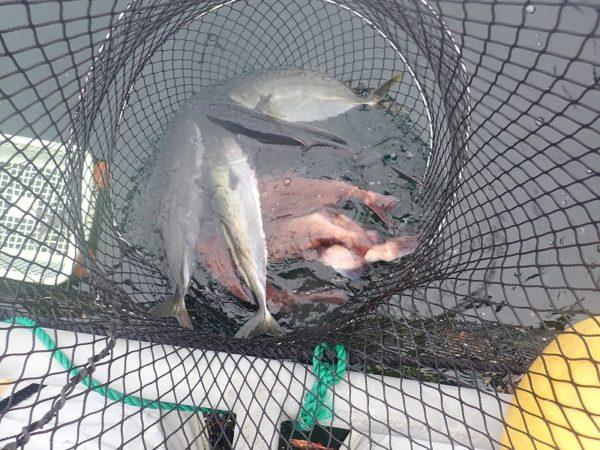 フィッシングレインボー7月の釣果