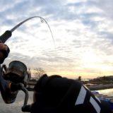 美浜フィッシングパーク2020低活性の魚にどう口を使わせる?