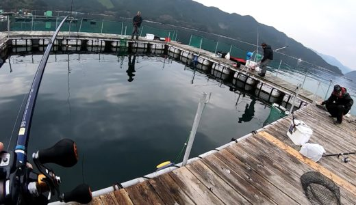 海上釣堀「貞丸」の名物ハタマスを釣る!ヒットエサやアタリはどう出る?