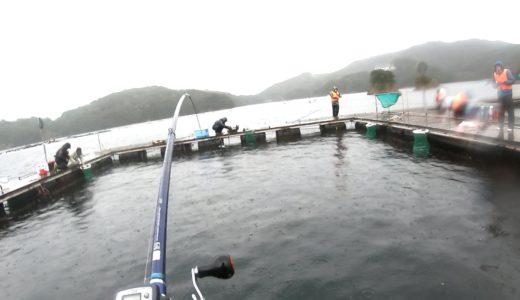 海上釣堀「傳八屋」で練り餌海道のエサが好反応!2020年3月釣行レポート
