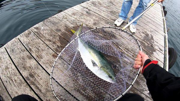 傳八屋で釣り上げたブリ6.8キロ
