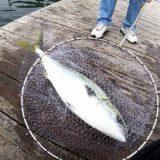 傳八屋で海上釣堀五目釣り!ブリを初め魚種多彩な3月釣行