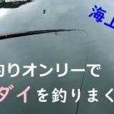 海上釣堀で脈釣り!文章での説明難しいけどアタリとアワセのタイミング